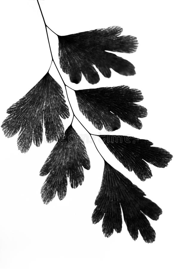 Silhouettes of leaves on a white background