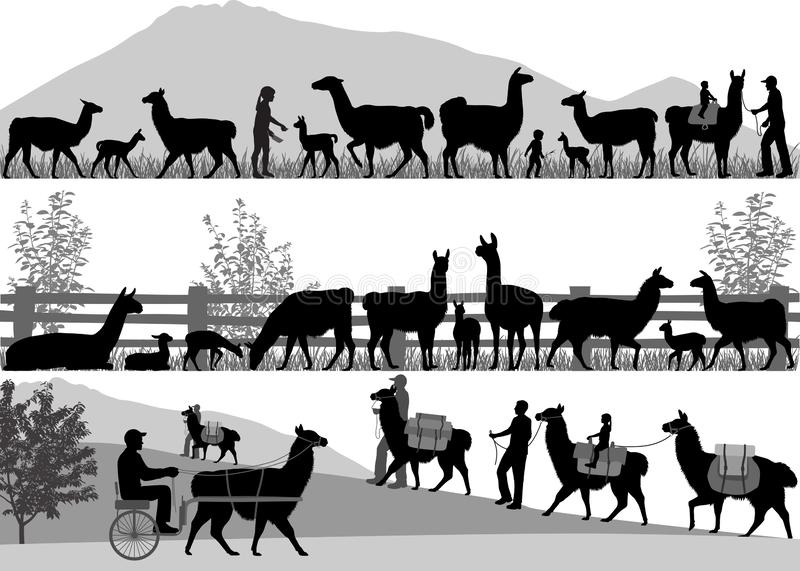 Silhouettes of llamas and its cubs outdoors. Vector illustration stock illustration
