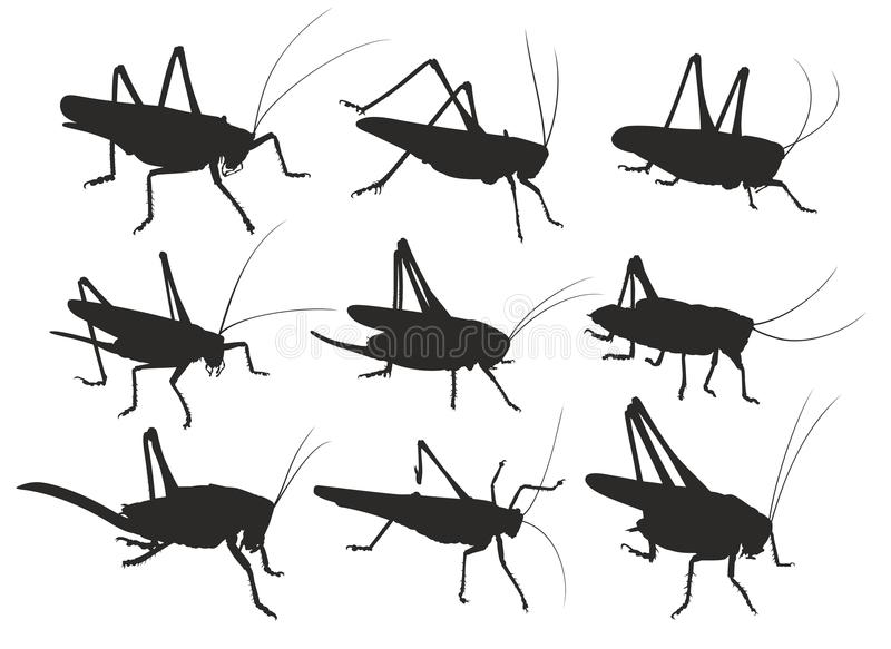 Silhouettes of locust. The Set of silhouettes of a locust stock illustration