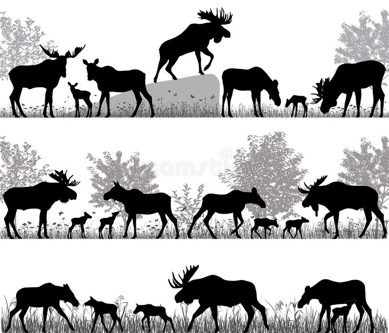Silhouettes of mooses also named elks and its cubs outdoors. Vector illustration royalty free illustration