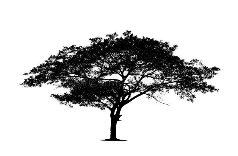 Silhouettes noires d'isolement d'arbre sur le fond blanc photos stock