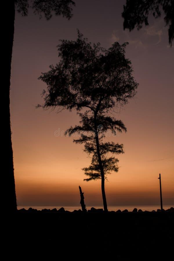 Silhouettes noires des arbres coniféres et un courrier de lampe sur le remblai avec des tetrapods dans la perspective de l'océan  images libres de droits