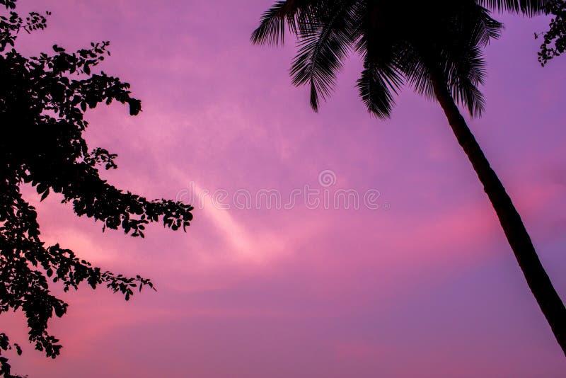 Silhouettes noires des palmiers et des feuilles sur un ciel pourpre rose de coucher du soleil photographie stock libre de droits