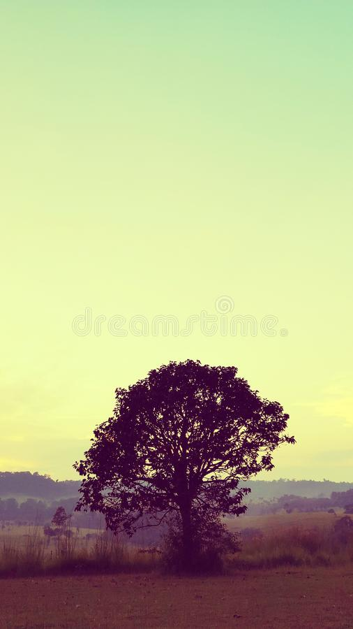 Silhouettes noires, grands arbres dans le pr?, et beau ciel photos stock