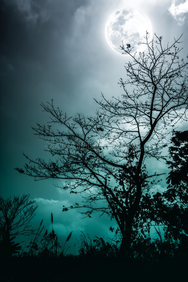 Free Silhouettes Of Dry Tree Against Night Sky And Bright Moon. Cross Stock Image - 90017311