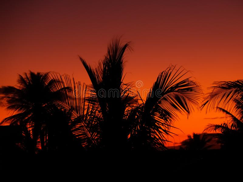 Silhouettes of palm branches against the bright orange sunset sky. stock photo