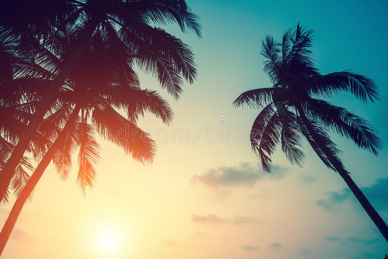 Silhouettes of palm leaves against the setting sky. Nature. royalty free stock images