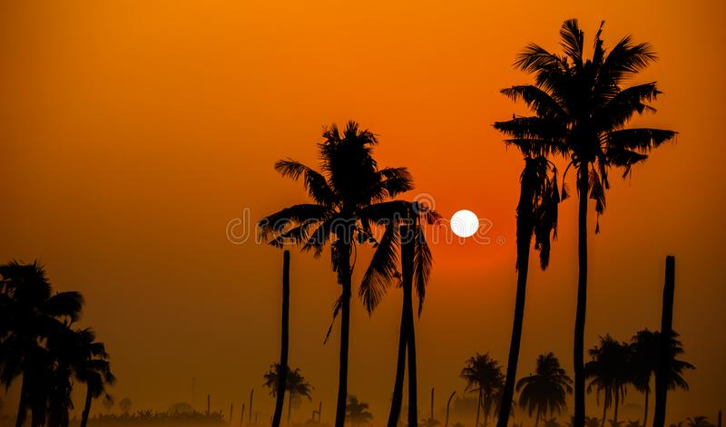 Silhouettes of palm trees against the sky during sunrise. Silhouettes of palm trees against the sky during a tropical sunrise stock images