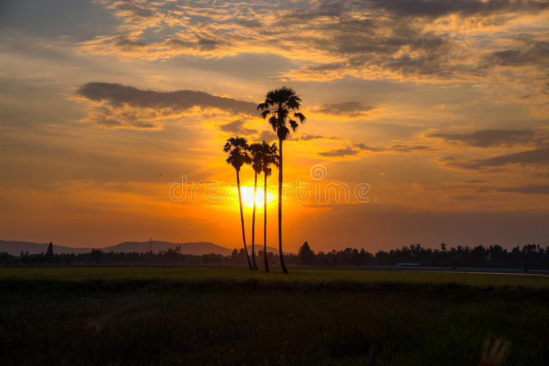 Silhouettes of palm trees against the sky royalty free stock photography