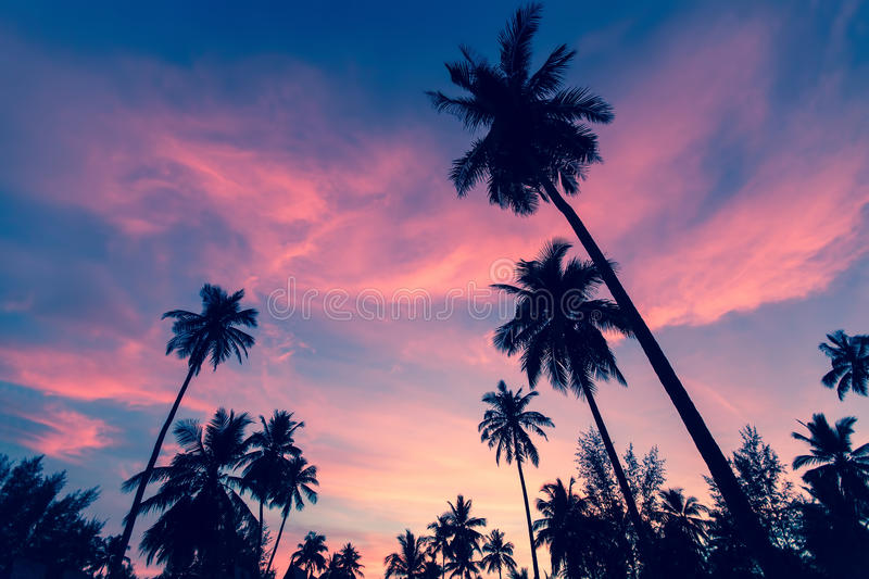 Silhouettes of palm trees against the twilight sky. Nature. stock photos