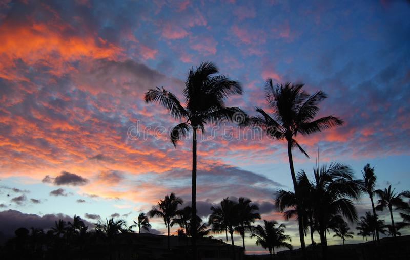 Palm Trees Against Vivid Red Sunset Sky with Clouds royalty free stock photos