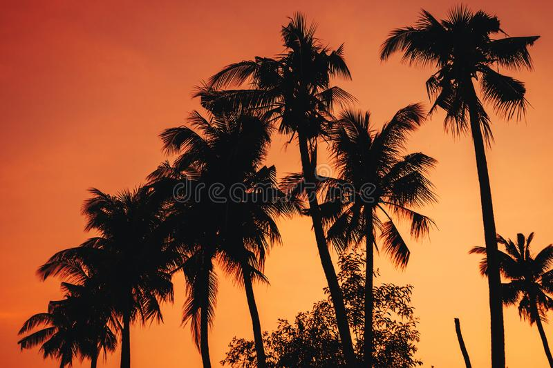 Silhouettes of palm trees on the background of an orange warm sky at sunrise royalty free stock photo