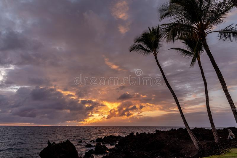 Silhouettes of palm trees on a beach of Big Island during golden hour. Silhouettes of palm trees on a beach of Big Island. Sun setting down with dramatic lights stock image