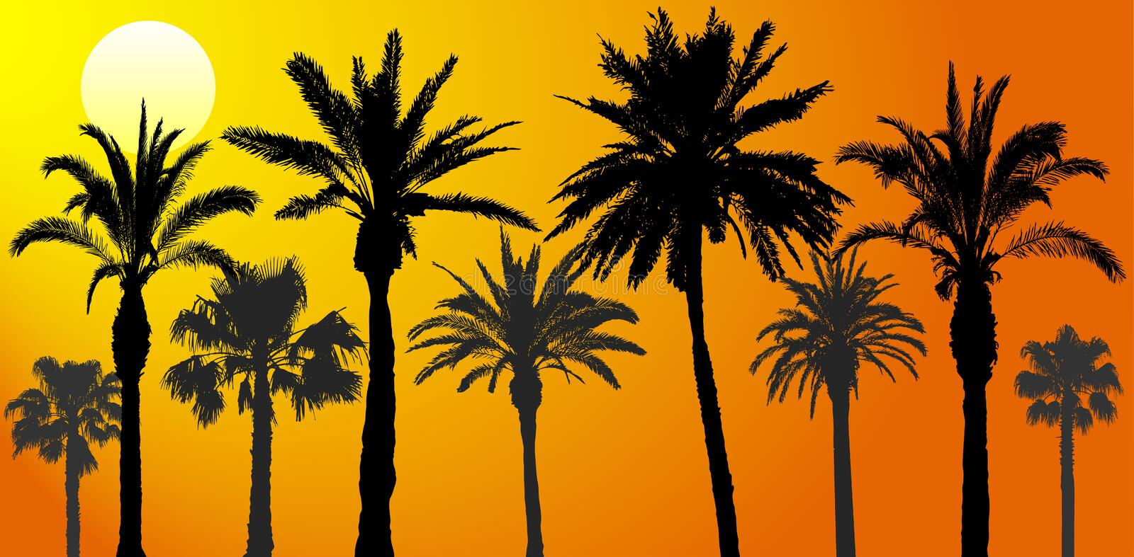 Silhouettes of palm trees at sunrise, vector illustration.  vector illustration