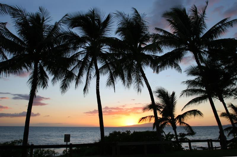 Silhouettes of Palm trees at sunset stock photography