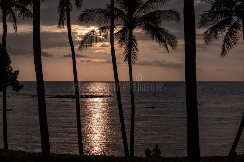 Silhouettes of palm trees at a sunset over Pacific ocean, Big Island, Hawaii. stock photo
