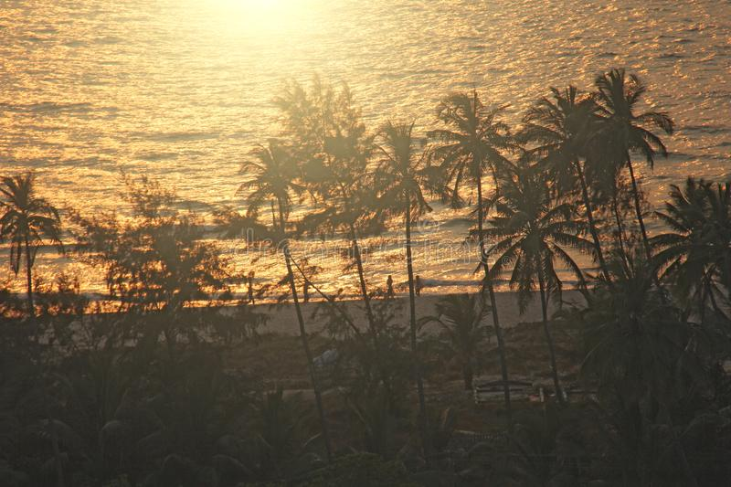 Silhouettes of palms on the background of the sunset and the sea. India, Goa royalty free stock images