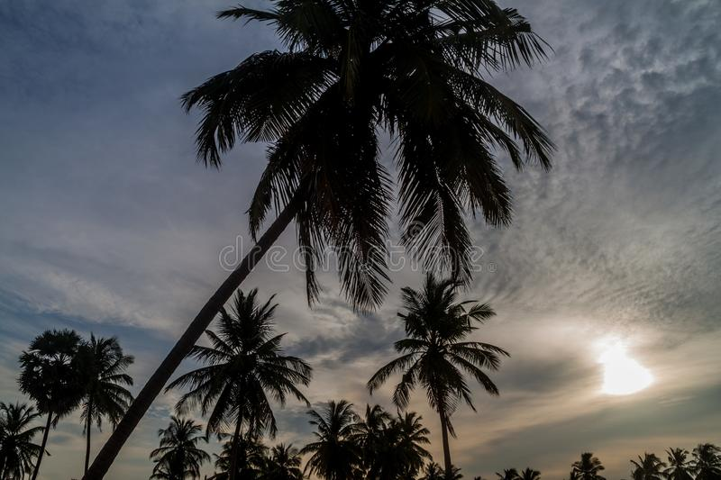 Silhouettes of palms at Nilaveli beach near Trincomalee, Sri Lan. Ka royalty free stock photos