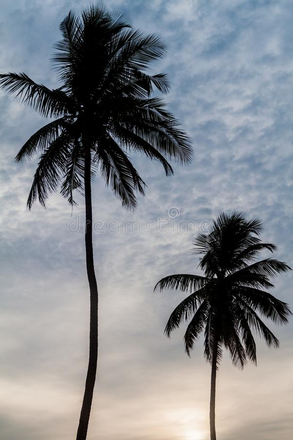 Silhouettes of palms at Nilaveli beach near Trincomalee, Sri Lan. Ka royalty free stock images