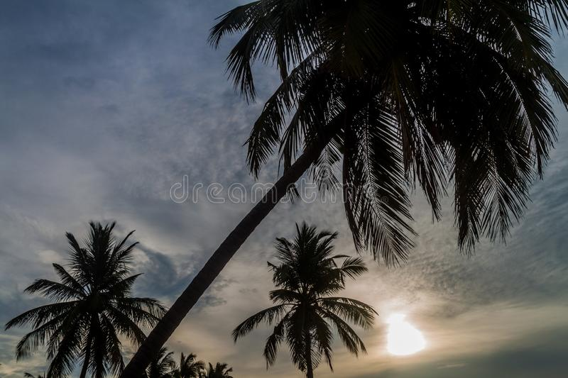 Silhouettes of palms at Nilaveli beach near Trincomalee, Sri Lan. Ka stock images