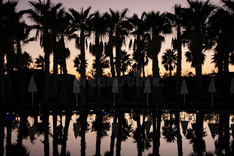 Silhouettes of palms row and umbrellas, on background of sunset sky. royalty free stock photos