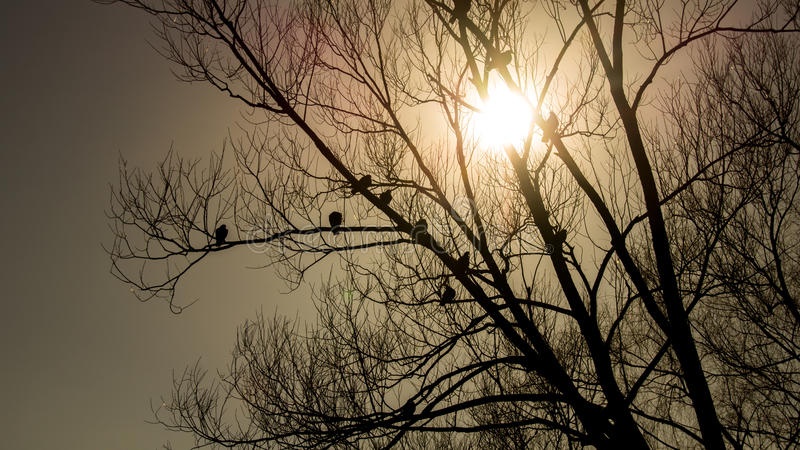 Silhouettes of pigeon flocks at sunset stock images