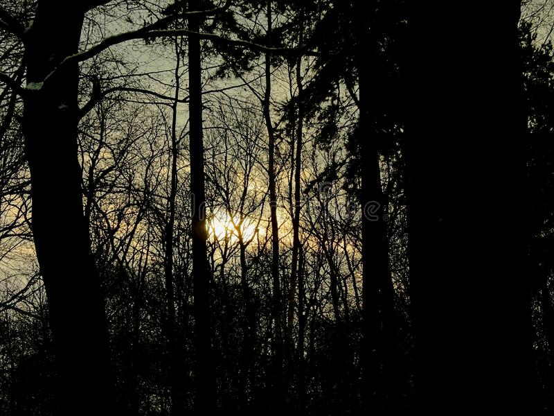 Silhouettes of pine trees in the forest against wintere evening sunset sky royalty free stock images