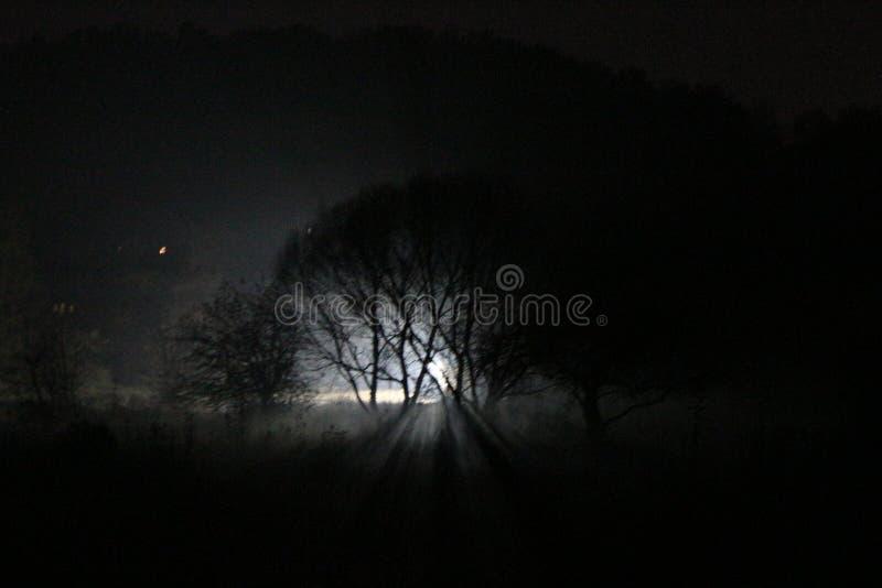 Silhouettes rétro-éclairées des arbres dans l'obscurité Beauté mystérieuse image libre de droits