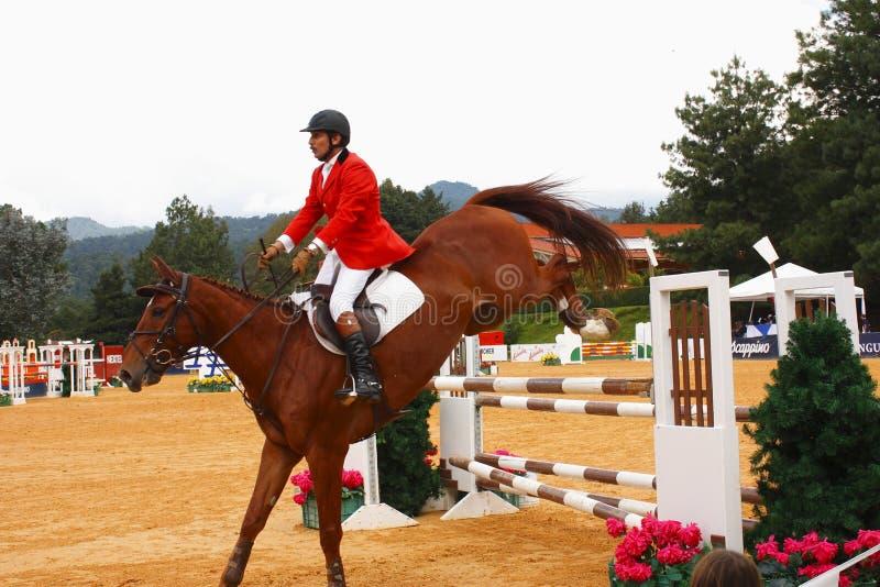 silhouettes rid- hästhästar för dressage som hoppar poloryttare, sportvektorn royaltyfri bild
