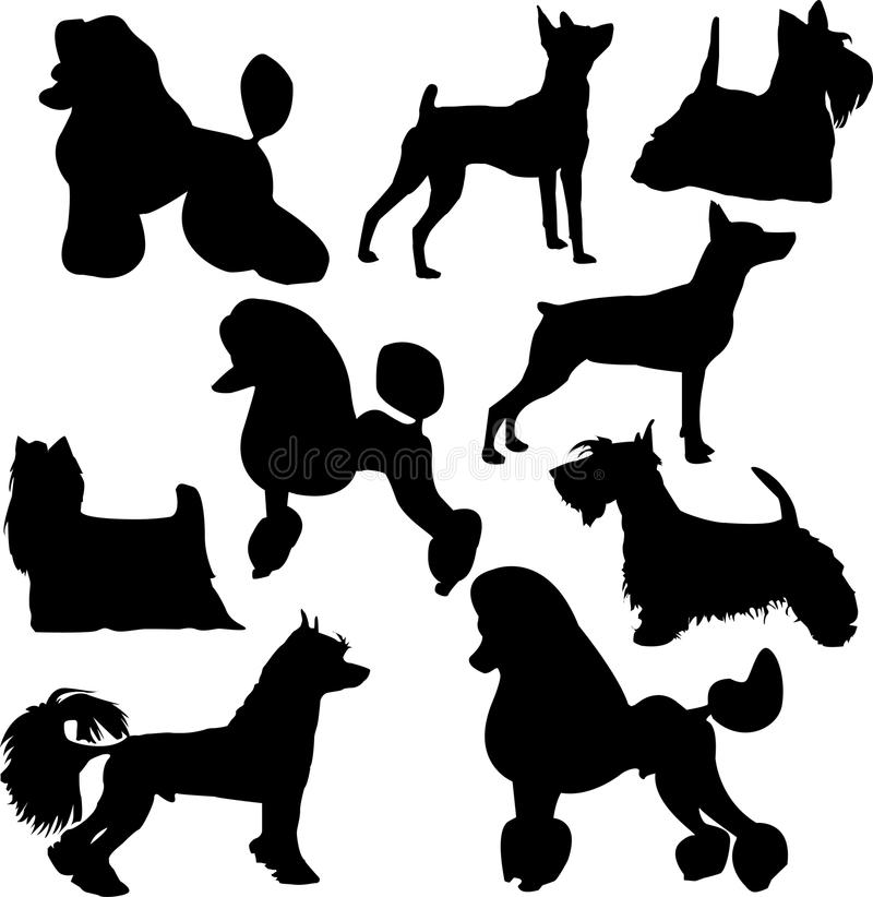 Silhouettes of standing decorative dogs vector illustration