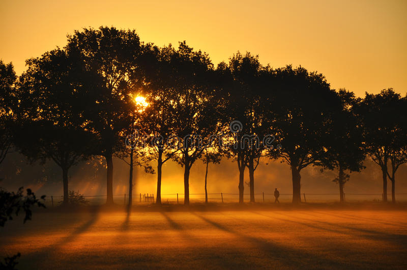 Silhouettes at Sunrise stock images