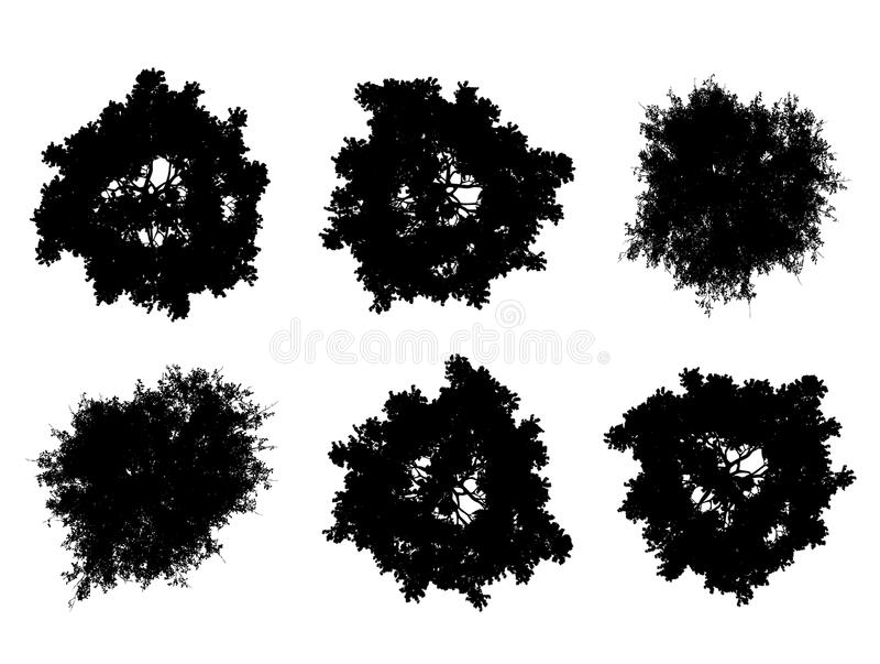 Silhouettes supérieures d'arbre photographie stock