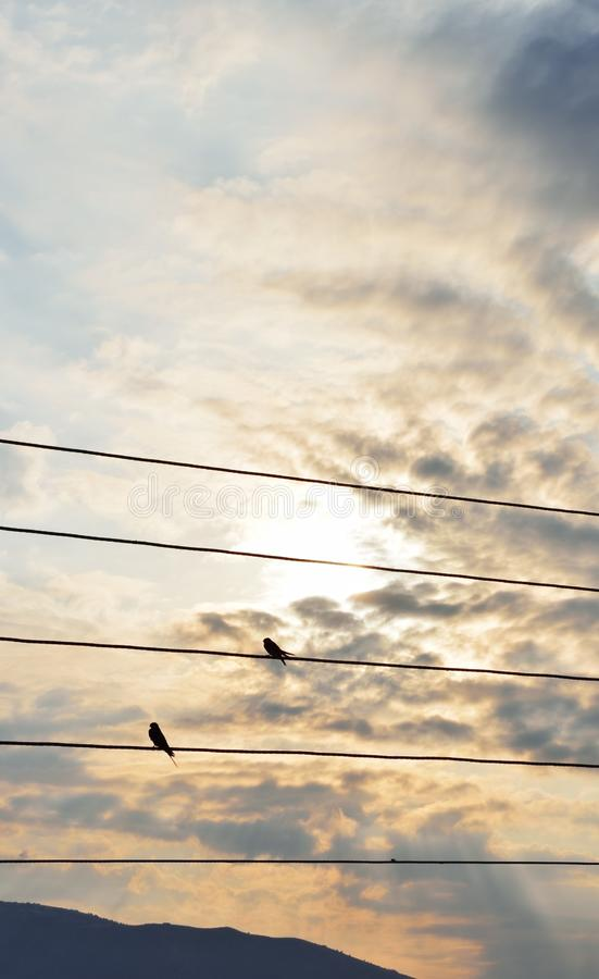 Silhouettes of swallows on a wires royalty free stock photography