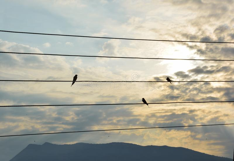 Silhouettes of swallows on a wires royalty free stock photo