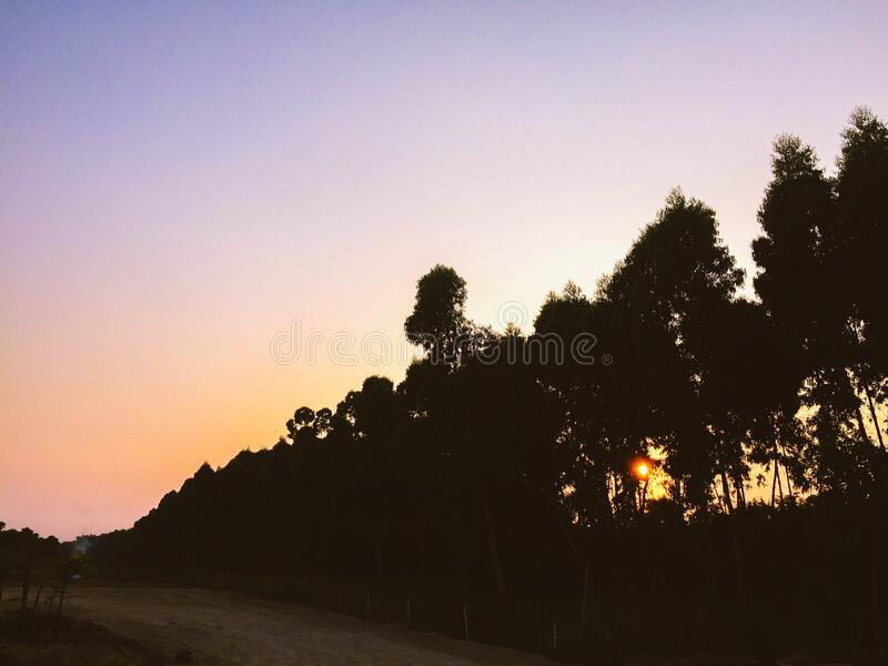 Silhouettes of Tall Trees Near Dirt Road during Sunset royalty free stock image