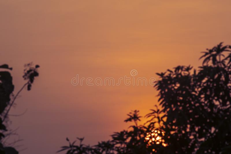Silhouettes of tree branches against orange sky royalty free stock photos