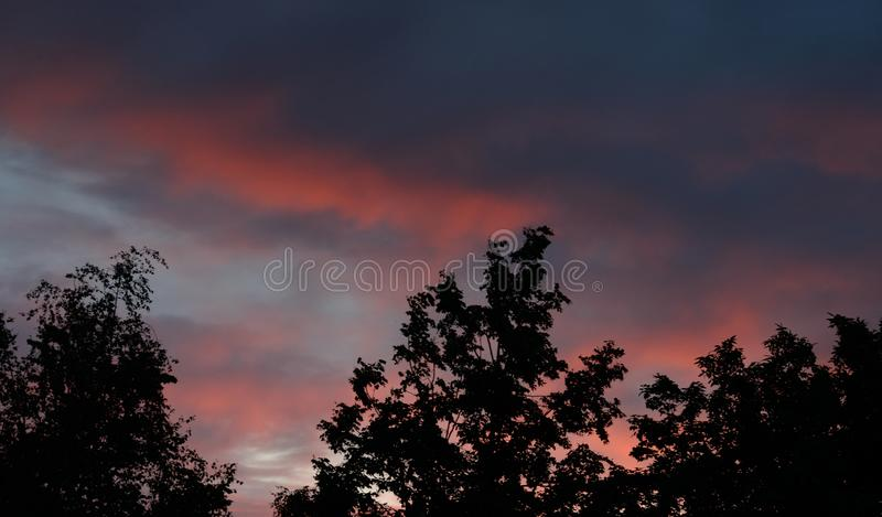 Trees at sunset. Silhouettes of trees at cloud sunset at evening royalty free stock photos