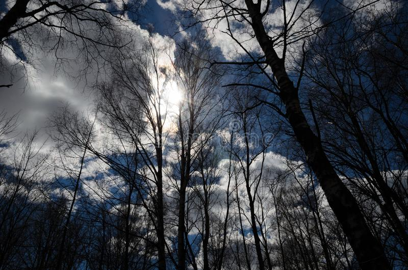 The silhouettes of trees in early spring illuminate the rays of the sun from behind the clouds. Beautiful spring landscape. The. Concept of spring. Awakening of stock image