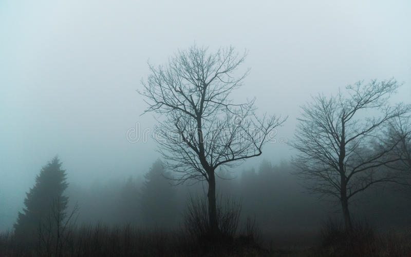 Silhouettes of trees in foggy evening royalty free stock photography