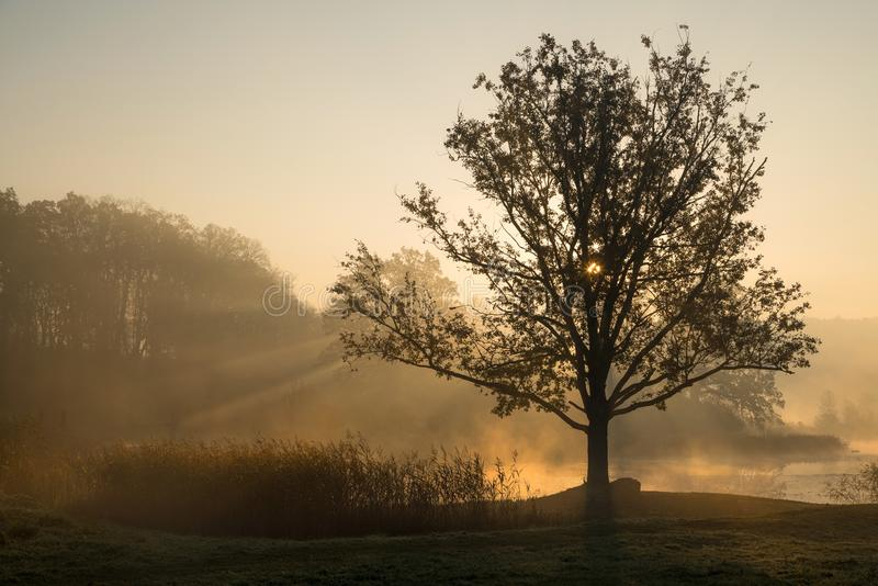 Silhouettes of trees on a misty foggy morning with sun rays coming through the tree branches on the lake shore in Europe. royalty free stock image