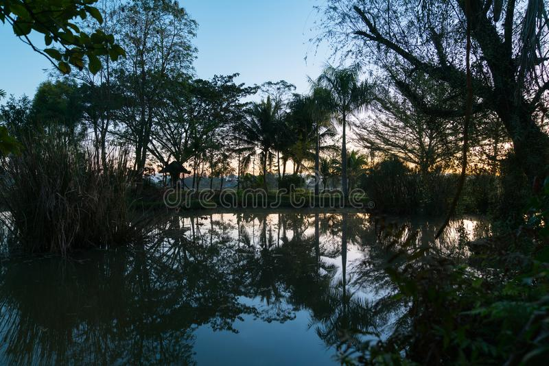 Silhouettes of trees and palms reflected in calm blue pond royalty free stock image