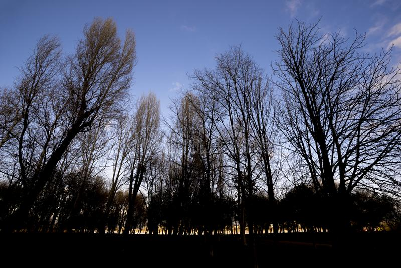 Silhouettes of trees park on a twilight stock image