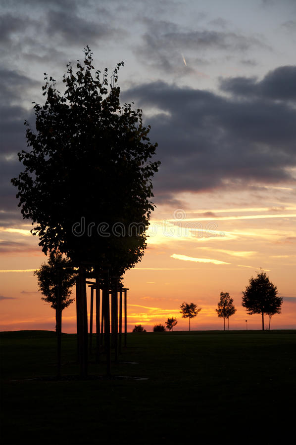 Silhouettes of Trees at Sunset. At a Golf Course in Germany royalty free stock image