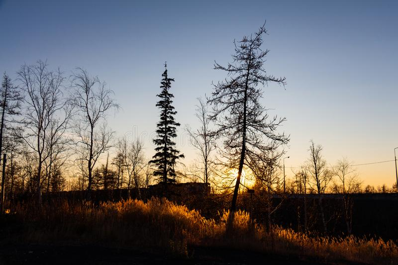 Silhouettes of trees on sunset background, Norilsk. Silhouettes of trees on sunset background, September 15, 2018, Norilsk stock photo