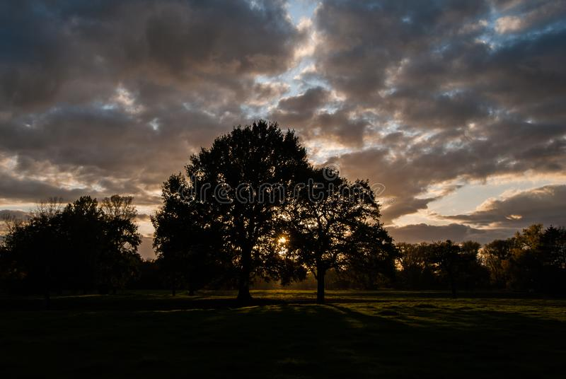 Silhouettes of trees in the sunset over the meadows. Dramatic sky over a dark scene stock image