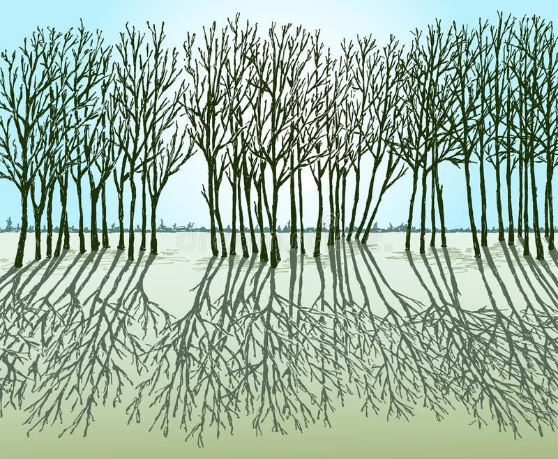 Silhouettes of trees and their shadows in a spring sunny day vector illustration