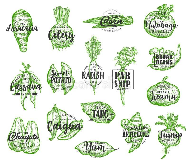 Silhouettes végétales exotiques avec le lettrage illustration de vecteur