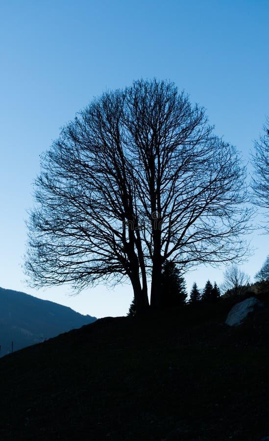 Silhouettet van een eenzame leafless boom onder een blauwe hemel in een berglandschap stock afbeeldingen