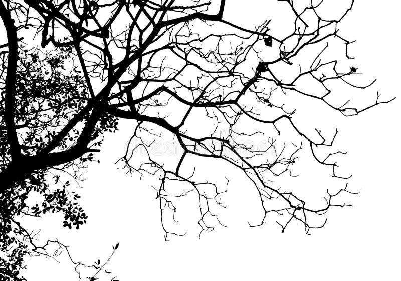 silhouettetree royaltyfria bilder