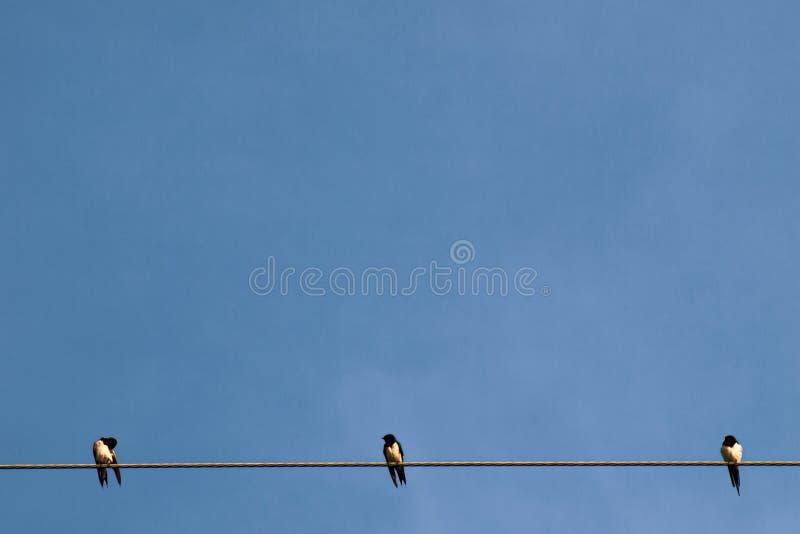 Silhouettez des paires ou un couple des oiseaux sur des lignes électriques de l'électricité Ciel clair à l'arrière-plan d'éclaira photos libres de droits